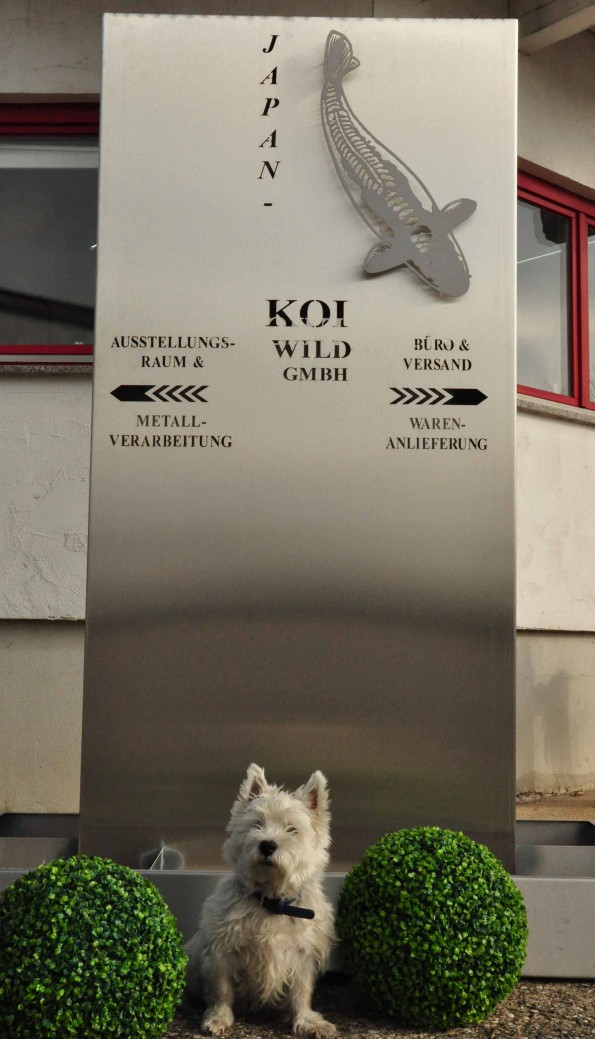 Japan-Koi Wild Firmenschild